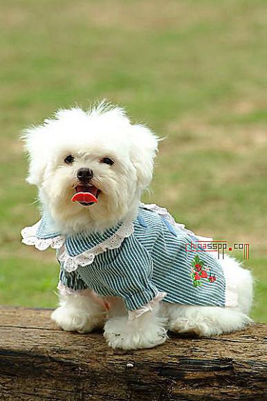 灰常灰常可爱的狗狗.你喜欢么?