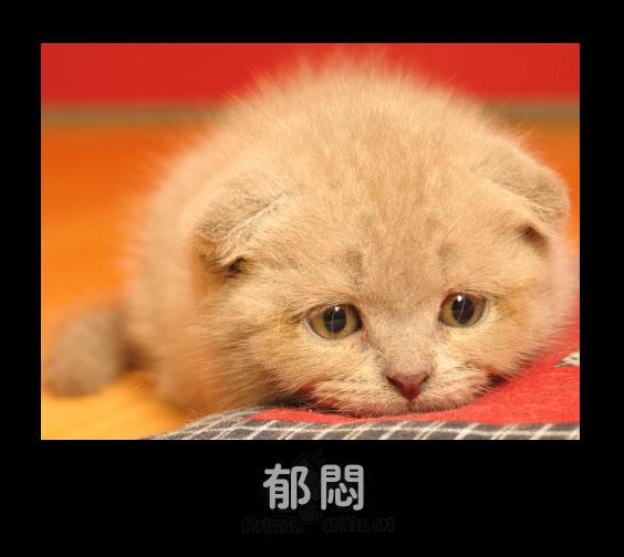【yy】爆^○^可爱宠物表情秀