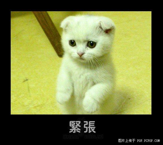 可爱的小动物 搞笑的表情